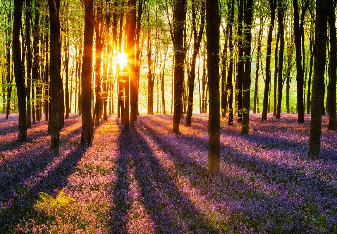 wallpops ideal decor woodland at dawn wallpaper 12 x 100 default name