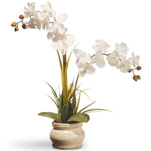 Spring Orchid Flowers in Pot
