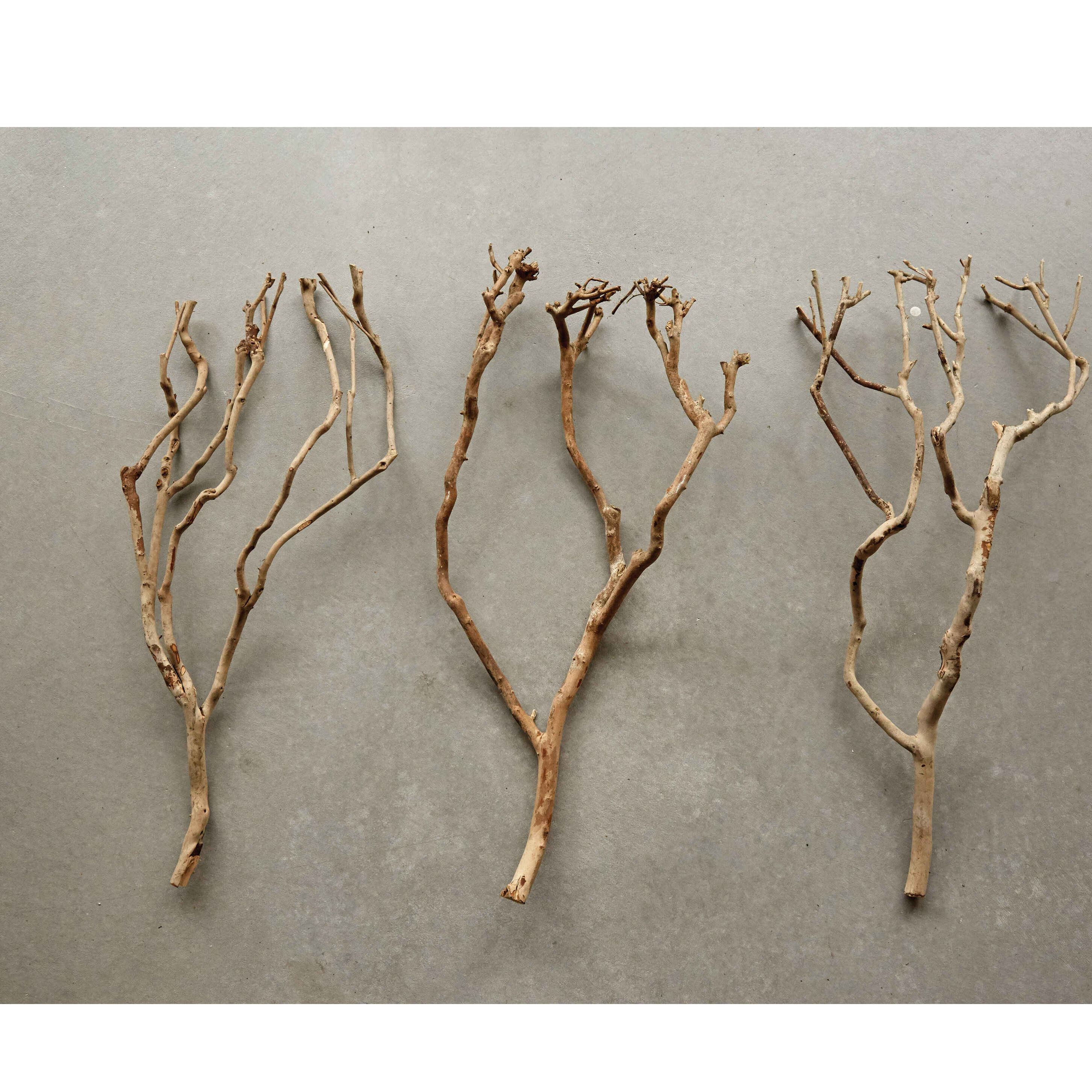 Gracie Oaks 12 Piece Natural Tea Tree Branch Set Wayfair