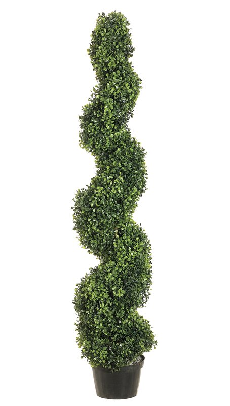 Darby Home Co Pond Spiral Top Boxwood Topiary In Planter Reviews Wayfair