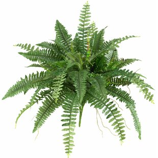 2 Piece Boston Fern Hanging Plant Set Of