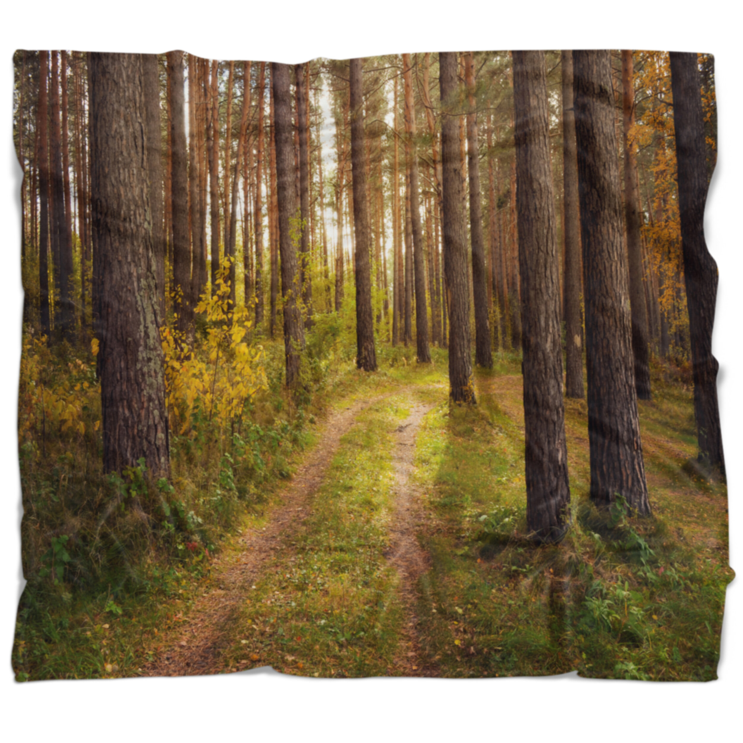 East Urban Home Forest Road Through Thick Fall Blanket Wayfair