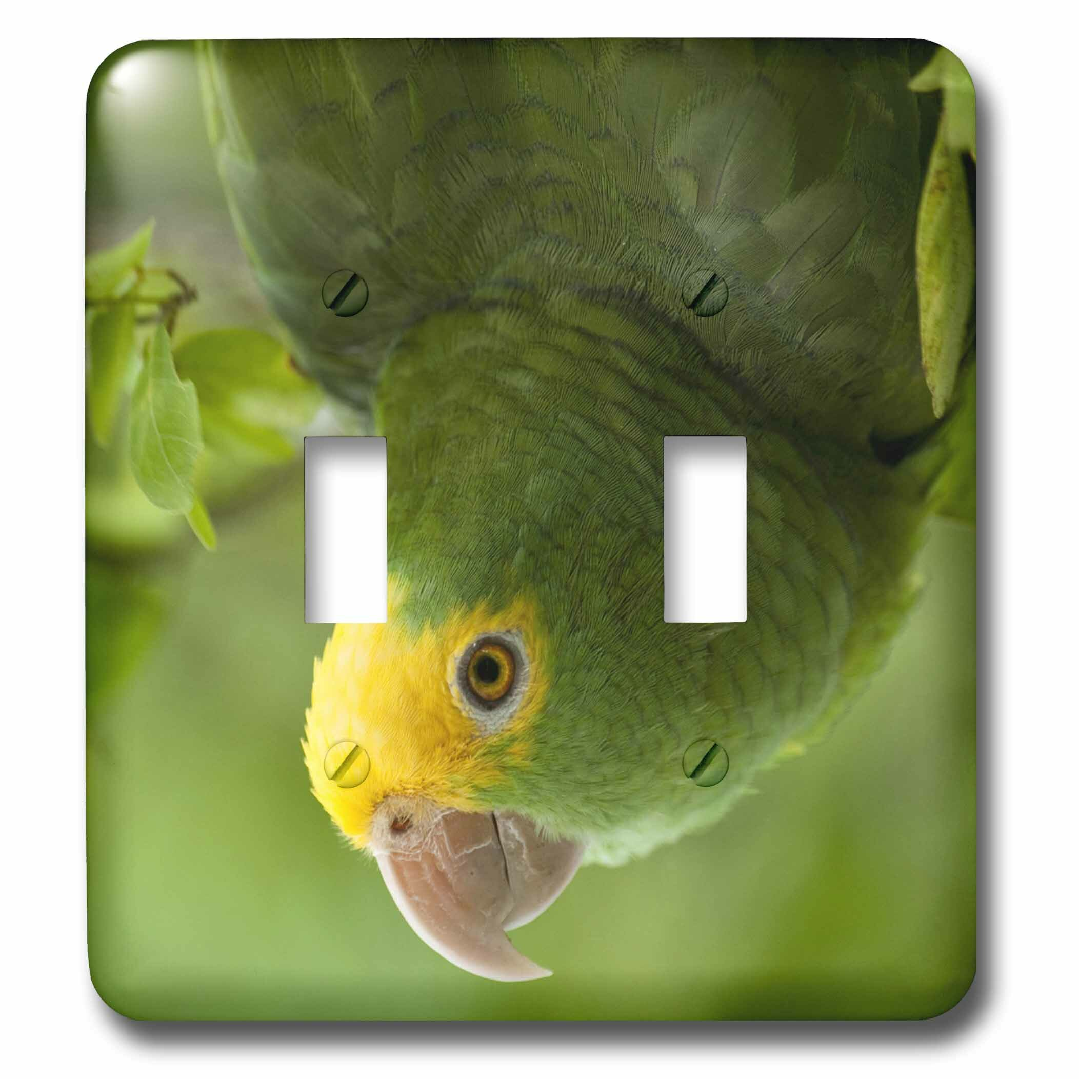 3drose Headed Amazon Parrot Tropical Bird Belize 2 Gang Toggle Light Switch Wall Plate Wayfair