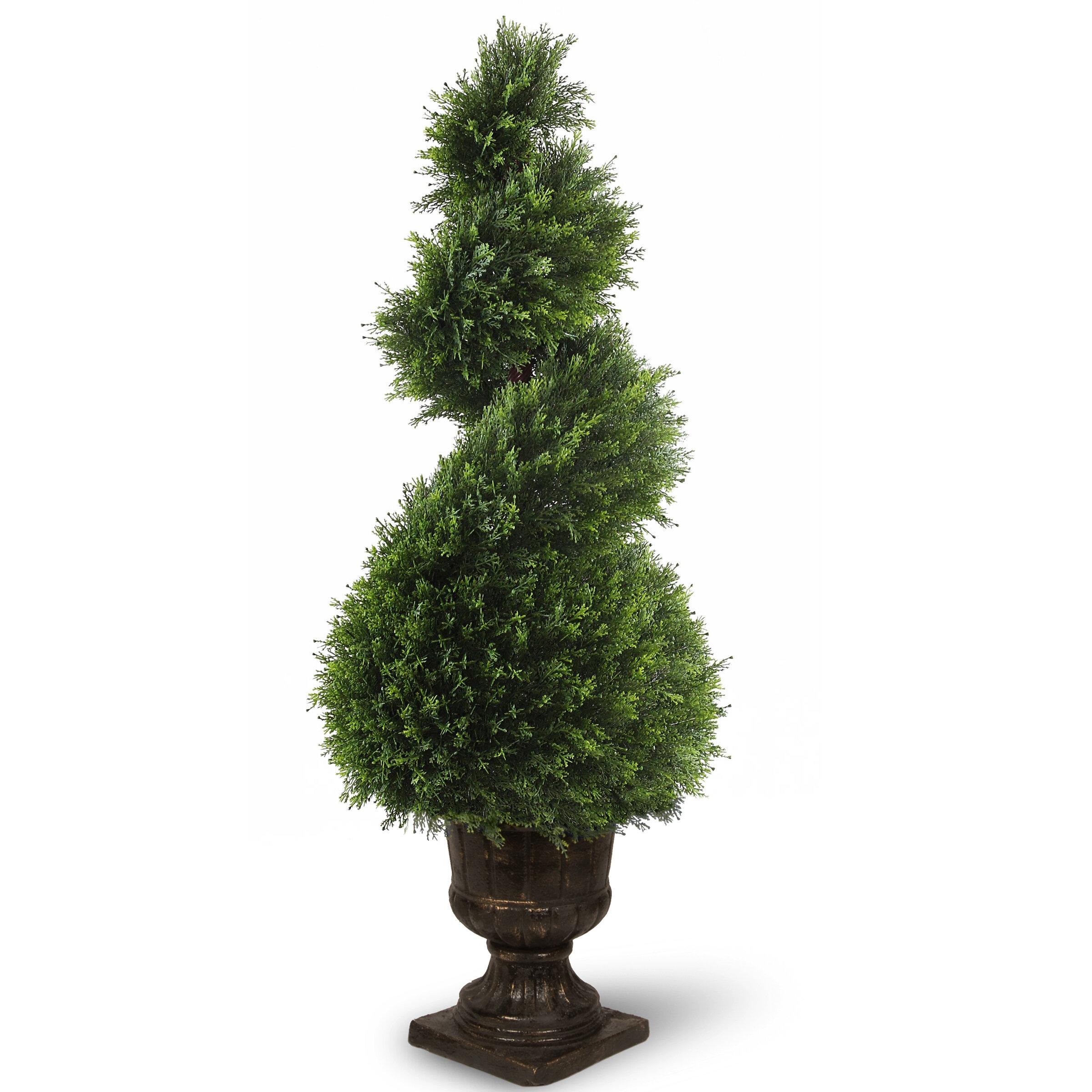 Astoria Grand Floor Moss Topiary In Urn Reviews Wayfair
