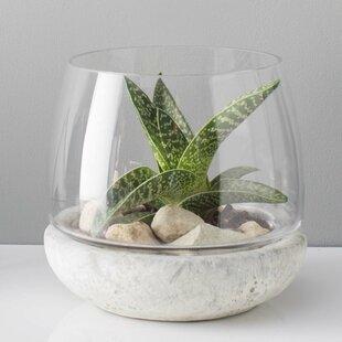Glass Terrariums You Ll Love Wayfair
