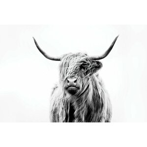Portrait of a Highland Cow Canvas Print