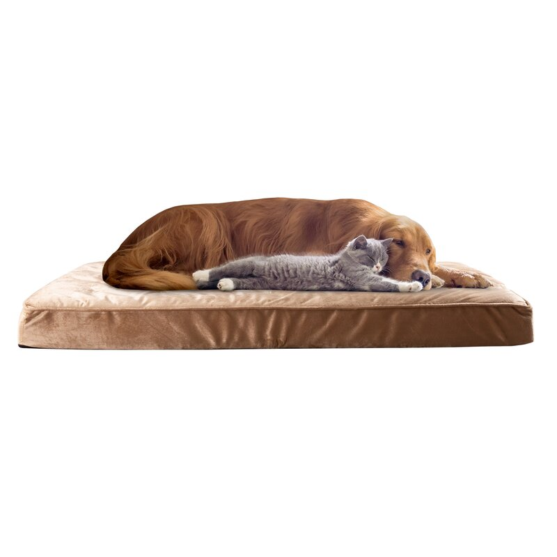 Petmaker Tufted Orthopedic Dog Pillow Reviews Wayfair