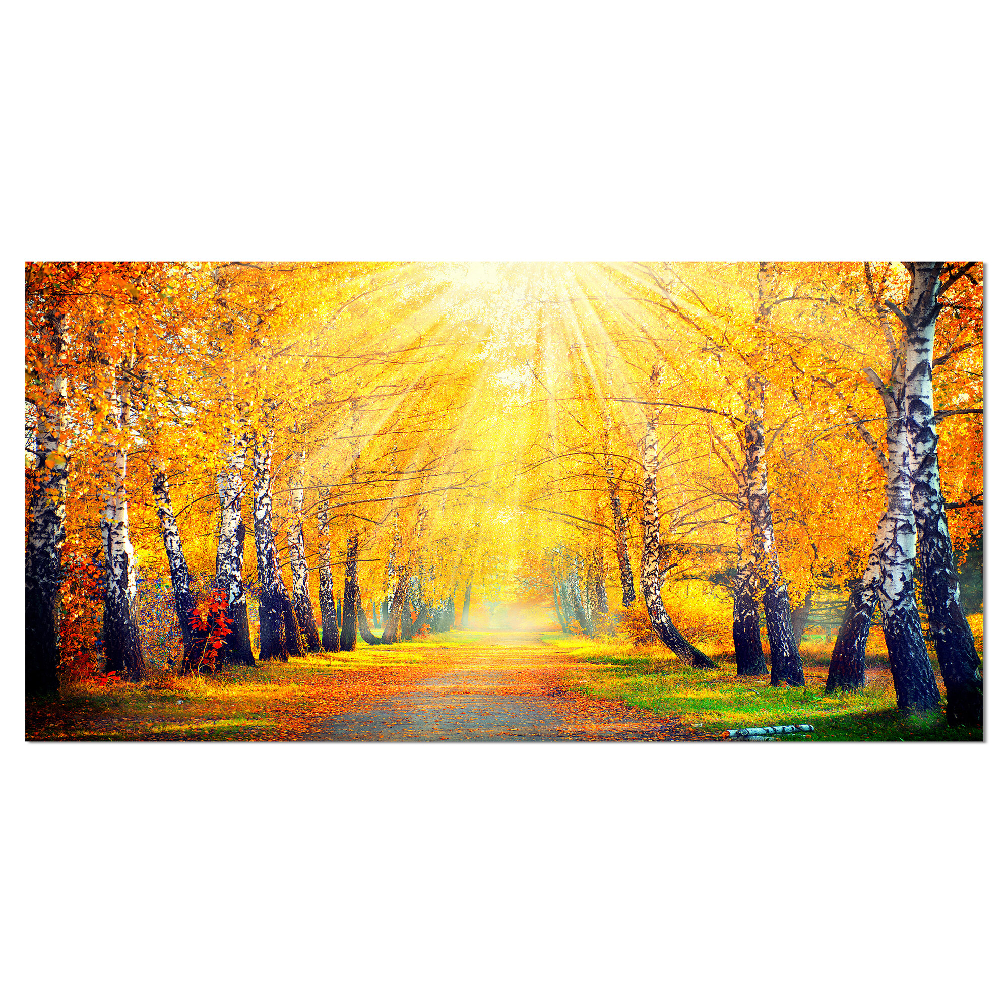 Designart Yellow Autumn Trees In Sunray Photographic Print On Wrapped Canvas Reviews Wayfair