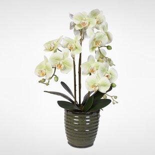 Handmade Phalaenopsis Orchids Floral Arrangement in Vase