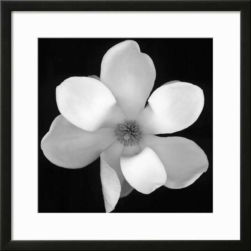 Ebern Designs \'Black and White Magnolia Flower\' Framed Photographic ...