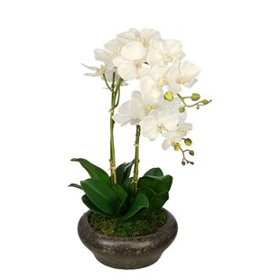 Artificial Double Stem Orchid in Stone Bowl
