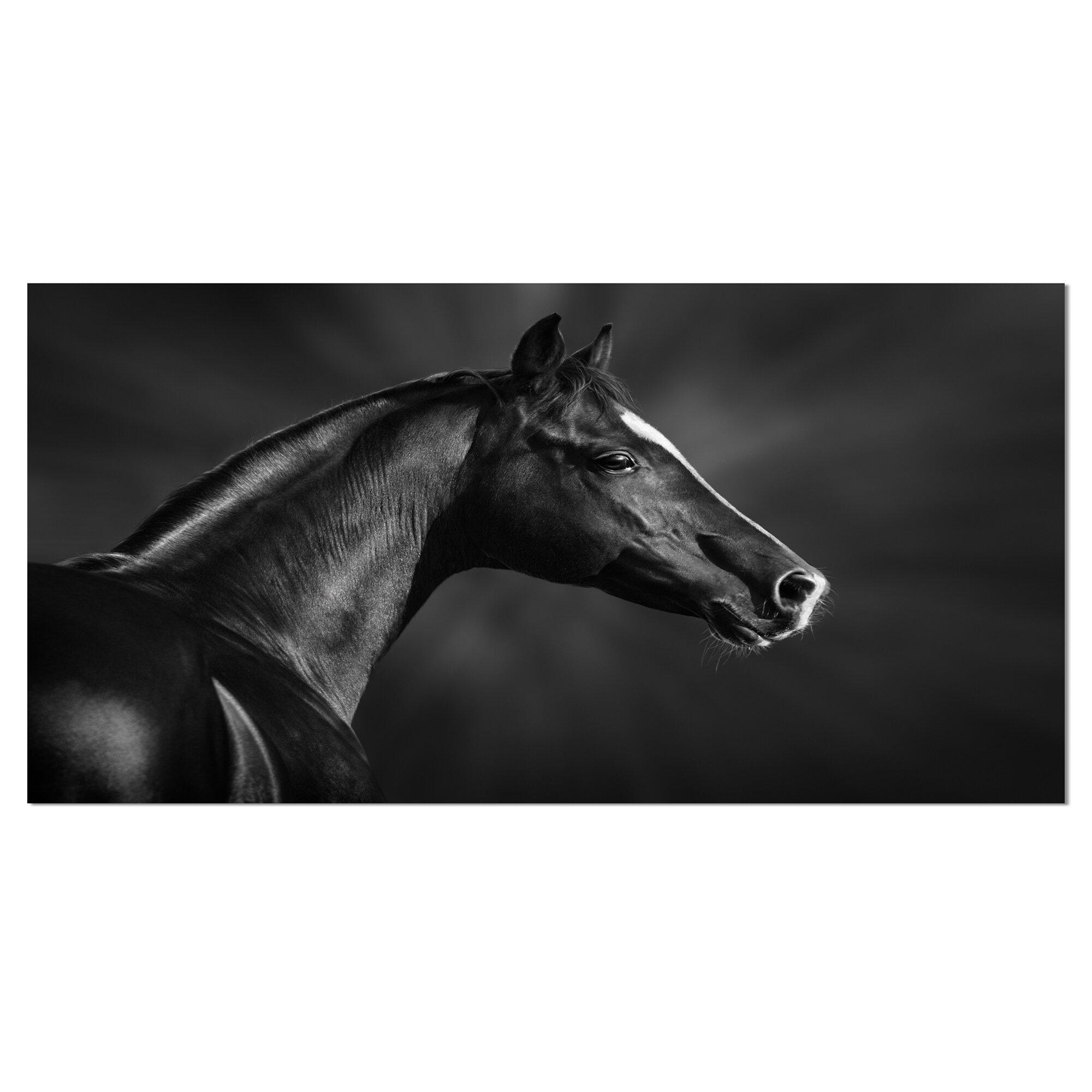 Designart Black Arabian Horse Portrait Photographic Print On Wrapped Canvas