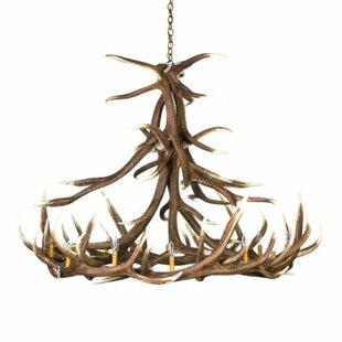 Millwood Pines Adaline ELK 12-Light Novelty Chandelier
