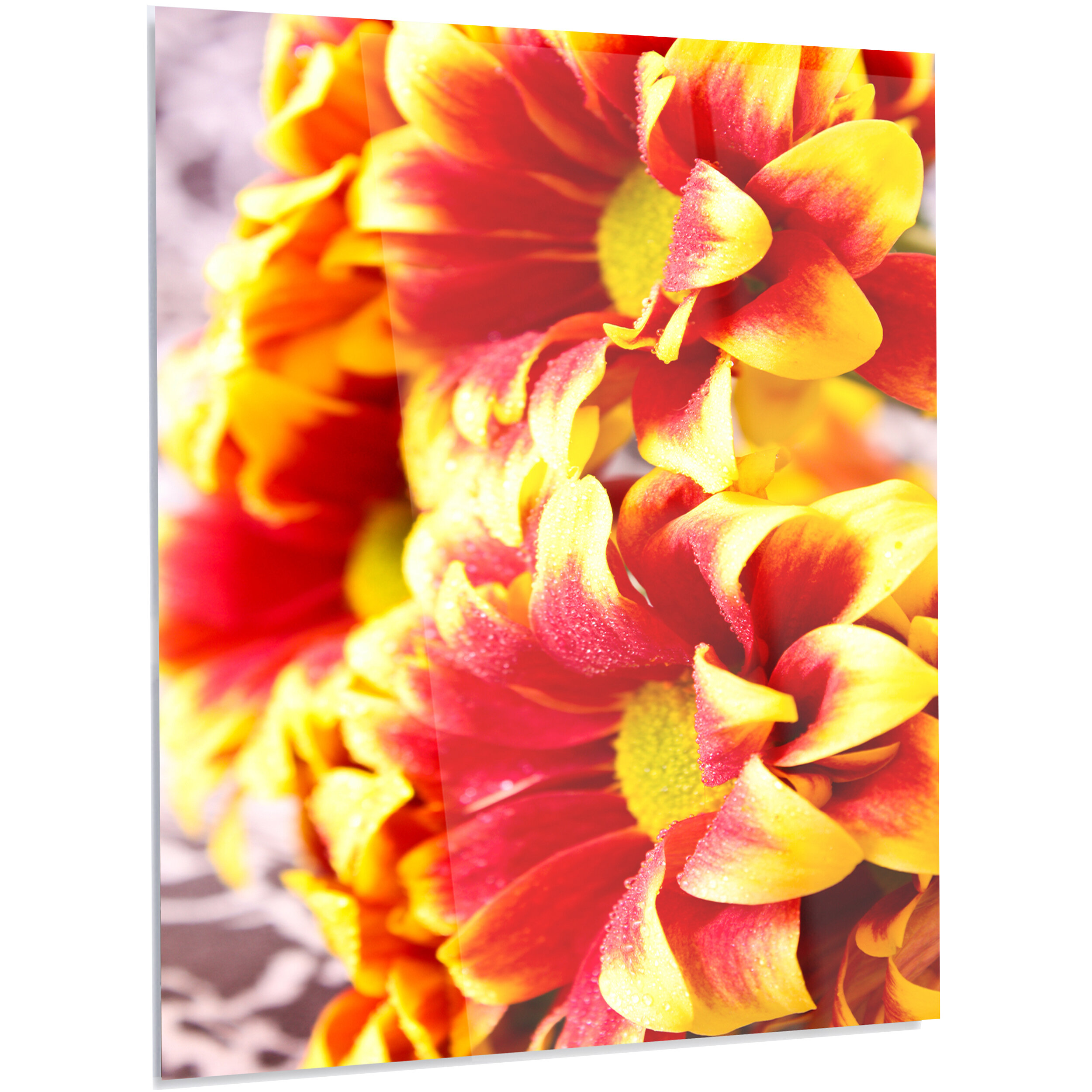 Designart Floral Red Yellow Flower Background Photographic Print