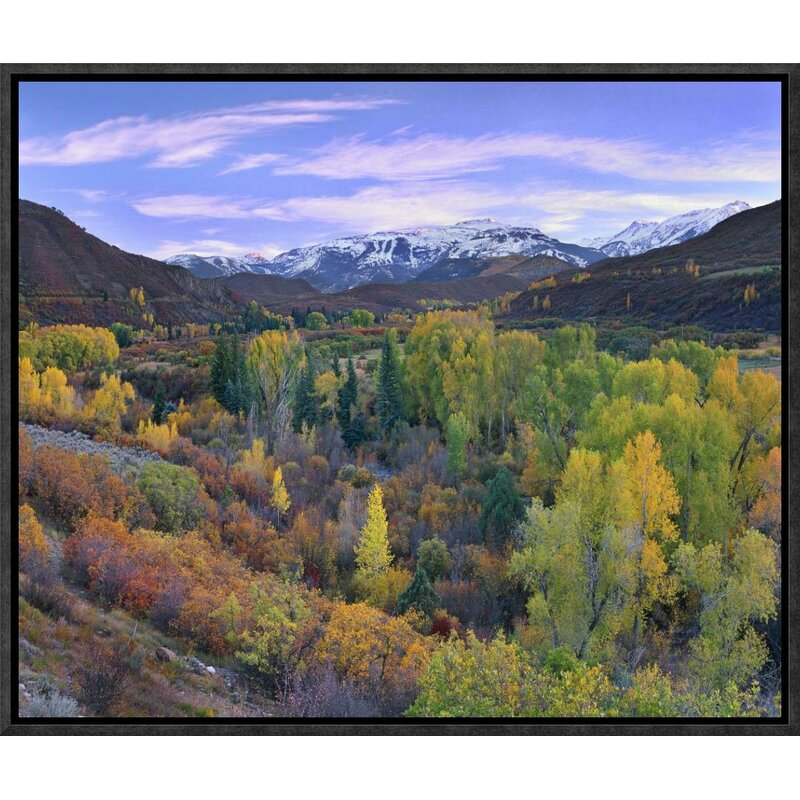 Global Gallery Quaking Aspen Forest In Autumn Snowmass Mountain Near Quaking Aspen Colorado By Tim Fitzharris Framed Photographic Print On Canvas Wayfair