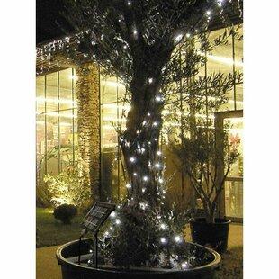 100 Cool White LED Lotti String Lights By The Seasonal Aisle