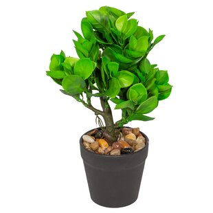 Artificial Desktop Foliage Plant In Pot Image