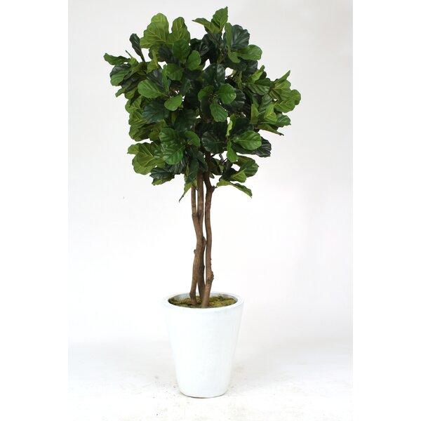 Distinctive Designs Fiddle Leaf Fig Tree In Pot U0026 Reviews | Wayfair