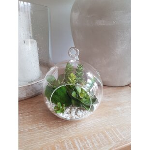 5 Artificial Succulent In Terrarium Set By Bay Isle Home