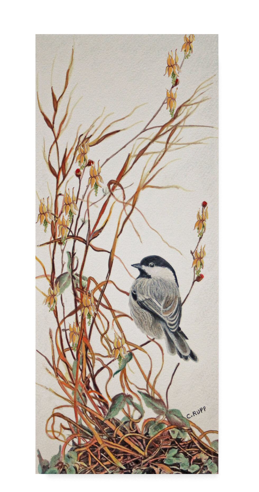 Charlton Home Chickadee In Summer Grass Acrylic Painting Print On Wrapped Canvas Wayfair
