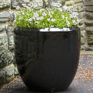 Orren Ellis Pullen Terracotta Pot Planter