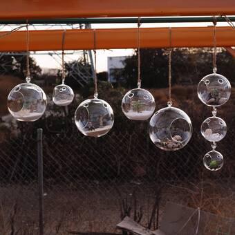 Bungalow Rose Gaylene Hydroponic Glass Terrarium Wayfair