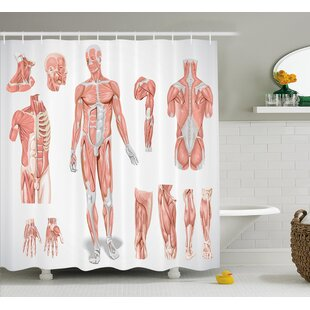 Human Anatomy Inner Muscle System Skin Structure With Cells Biology Health Medical Display Single Shower Curtain