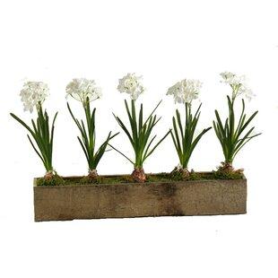 Silk paperwhite flowers wayfair paperwhites flower in planter mightylinksfo