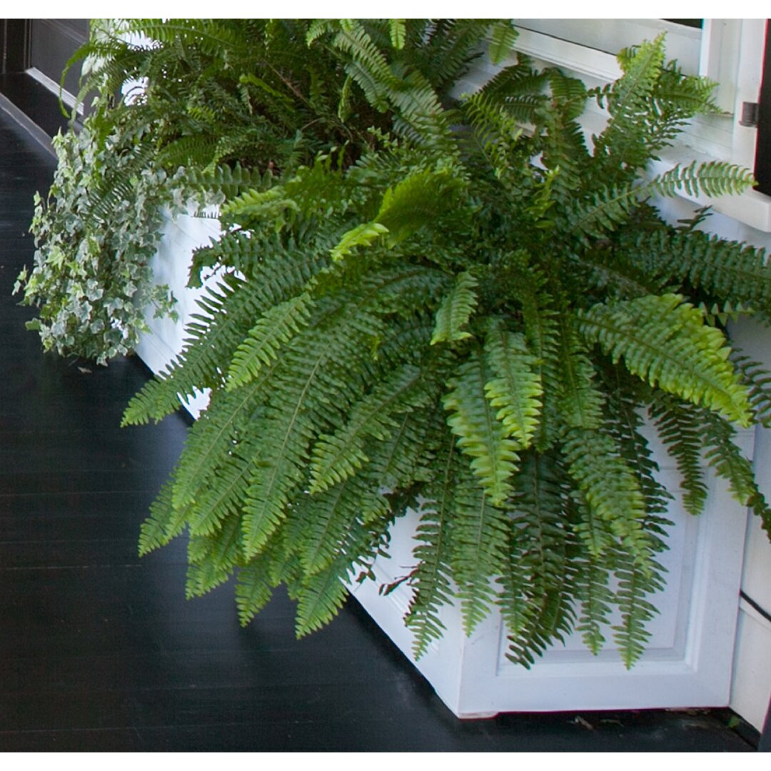 Haldeman Fibreglass Planter Box