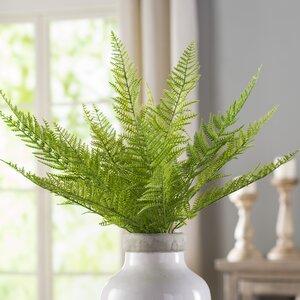 Green Asparagus Plant