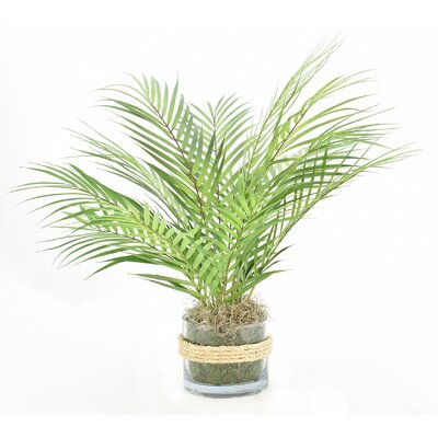 entracing palm tree type house plant. Floor Palm Plant in Rope Embellished Glass Pot Nearly Natural Silk Areca with  Reviews Wayfair
