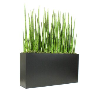 Grass You Ll Love Wayfair