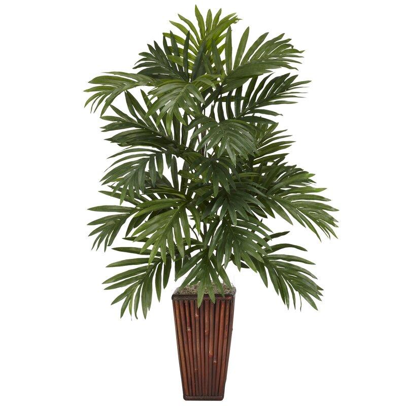 Bloomsbury Market Areca Palm Desk Top Plant In Decorative Vase