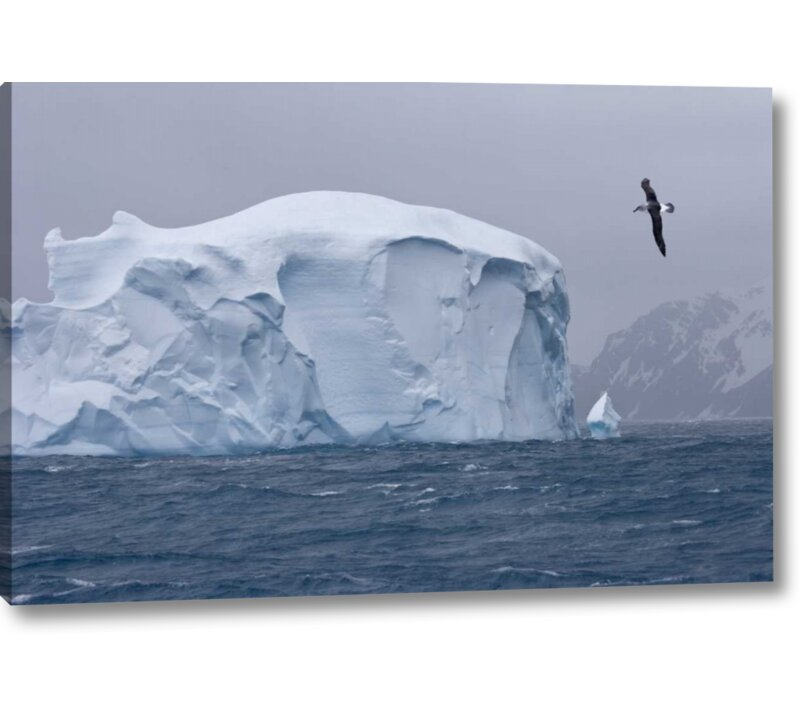 World Menagerie South Georgia Island Albatross By An Iceberg Photographic Print On Wrapped Canvas Wayfair