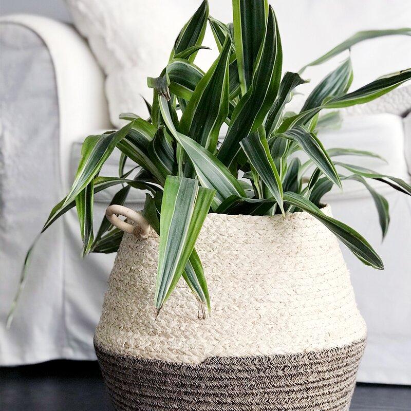 Bay Isle Home Shanell Jute Pot Planter Wayfair