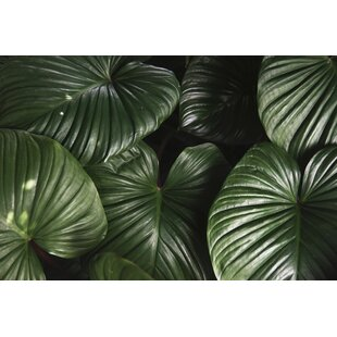 Jungle Leaf 2.6m x 300cm Matte Wallpaper Panel by East Urban Home