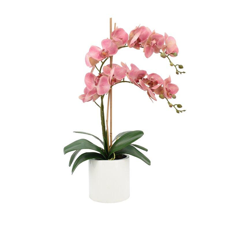 Creative Displays Inc Double Orchid Floral Arrangement In Pot Reviews Perigold