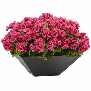 Geranium Arrangement in Planter