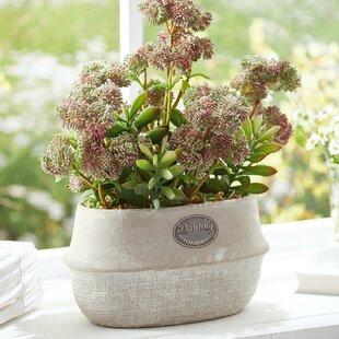 outdoor artificial flowers | wayfair.co.uk