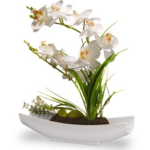 New White Orchid Arrangements | Wayfair UY47