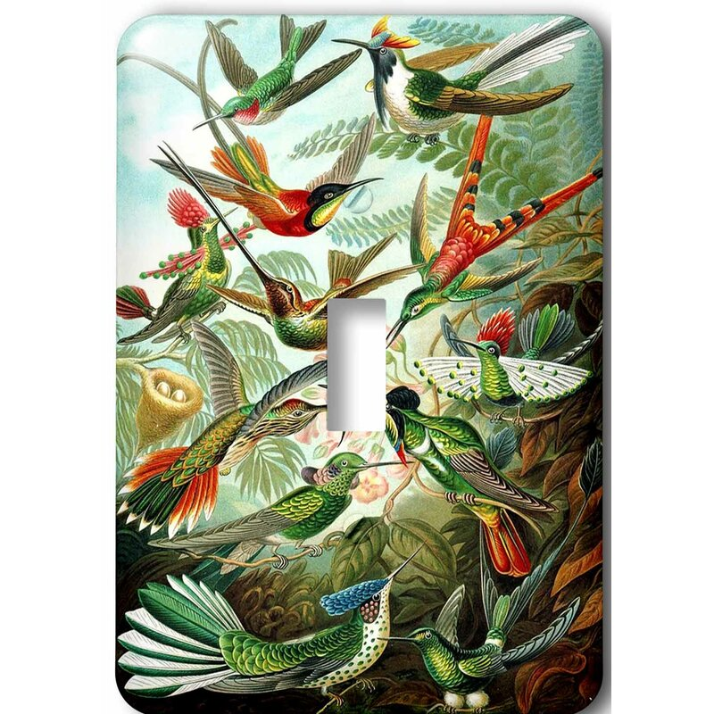 3drose Famous Biologist Sketch Of Humming Birds 1 Gang Toggle Light Switch Wall Plate Wayfair