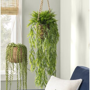 Bamboo You'll | Wayfair on artificial bamboo potted plant, artificial house plants & trees, artificial ficus trees for home decor, china doll plant, artificial bamboo vine,