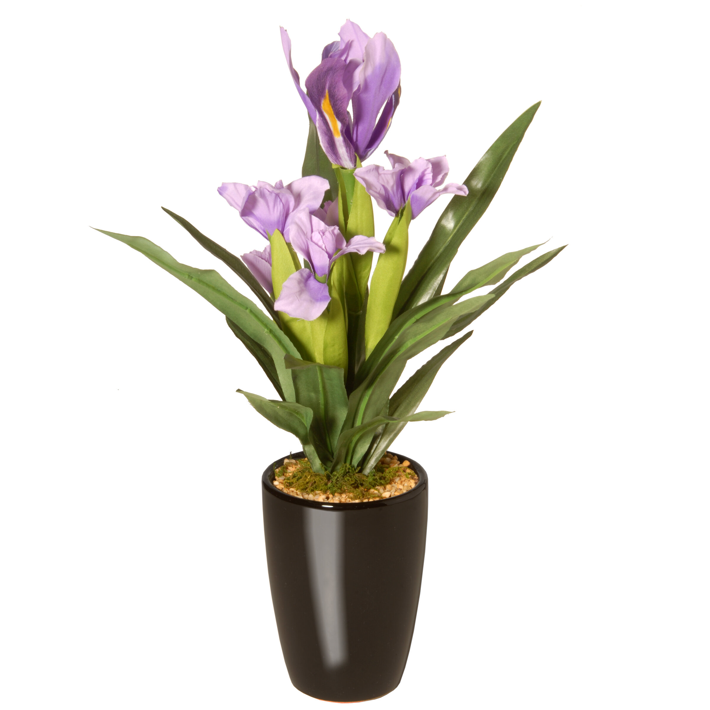 Charlton Home Potted Iris Floral Arrangement In Pot Wayfair