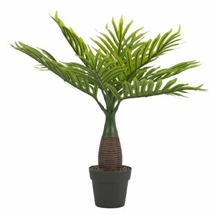 Floor Palm Tree In Pot (Set Of 2) By Bay Isle Home