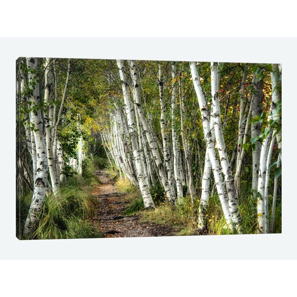 East Urban Home A Walk Through The Birch Trees Photographic Print On Canvas Reviews Wayfair