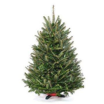 Fresh Christmas Trees.Real Christmas Trees You Ll Love In 2019 Wayfair