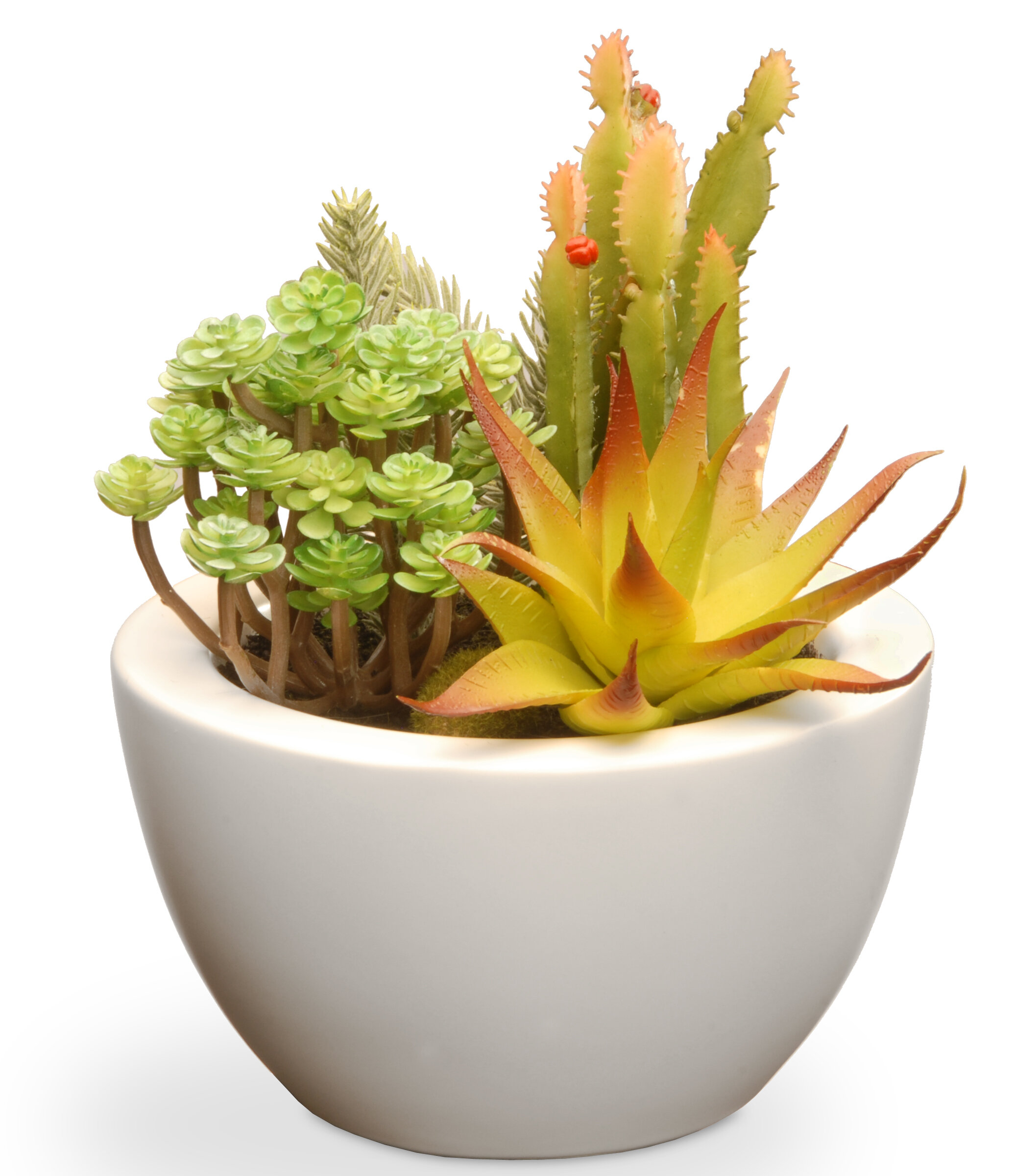 Primrue Succulent Desk Top Plant In Pot Reviews Wayfair