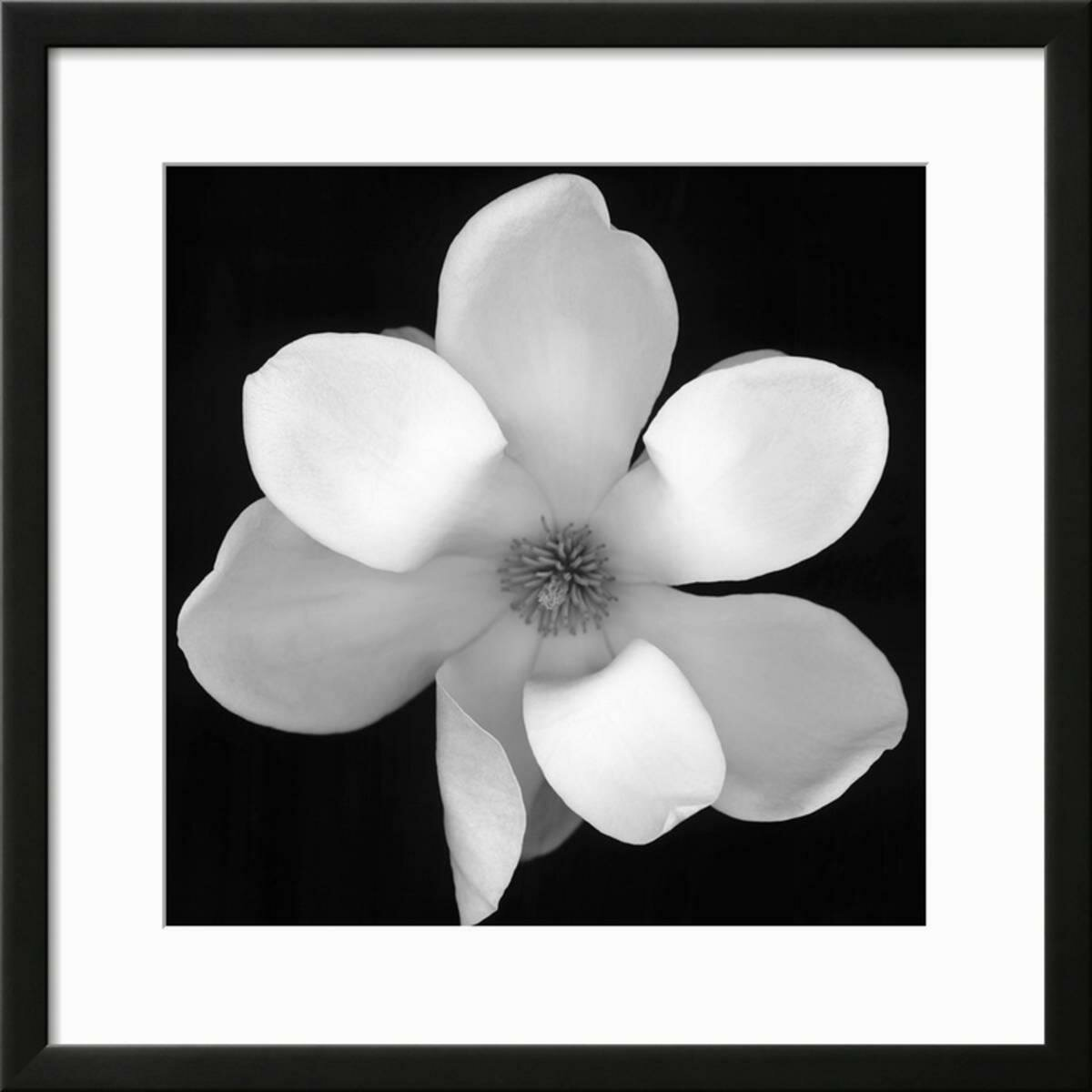 Ebern Designs Black And White Magnolia Flower Framed Photographic
