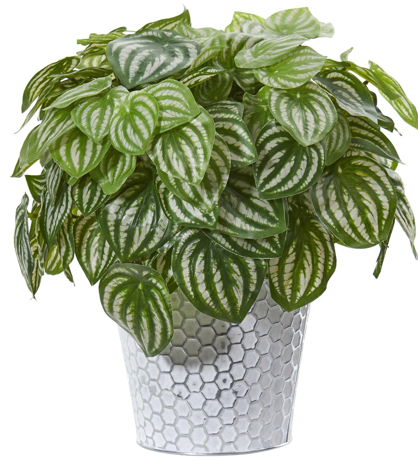 Wrought Studio Artificial Peperomia Plant In Planter Wayfair