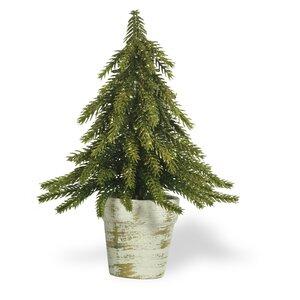 Fir Desktop Cedar Tree in Pot